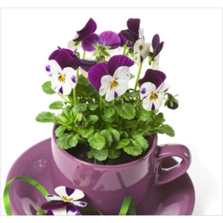 Floral Planter from Floralia - the best flower shop in Limerick